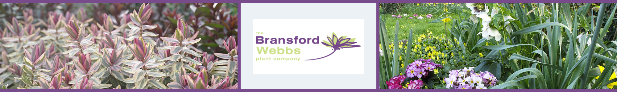 The Bransford Webbs Plant Company