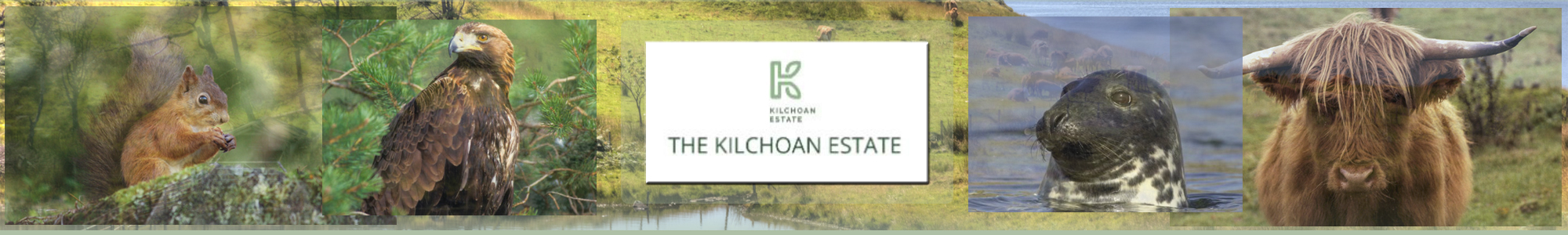 Kilchoan Management Limited